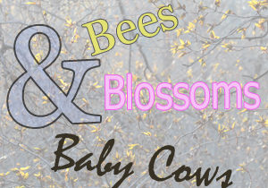 BeesBlossomsCows